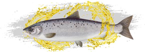 Omega 3 ribje olje